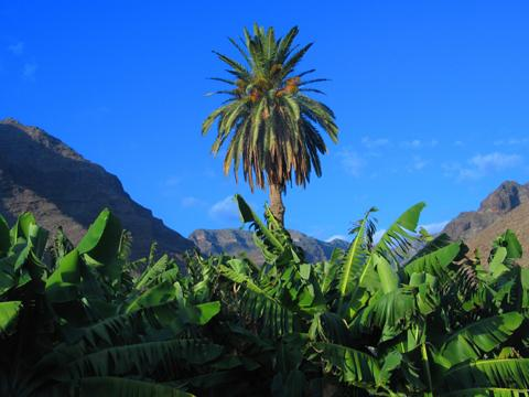 Kanarische Inseln - AIDAvita Grosse Winterpause Kanaren