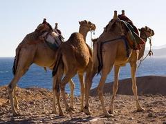 Mittelmeer - Suezkanal - Asien